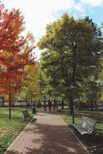 Autumn Beauty In Nature Colors Day Footpath Green Color Growth Men Nature Outdoors Parc Park People Real People Sky Sunny Day The Way Forward Tree Walking