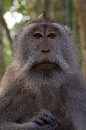 Monkey Monkeyforrest  Primate Animal Wildlife Mammal Animals In The Wild One Animal Vertebrate Portrait Primate Animal Wildlife Mammal Animals In The Wild One Animal Vertebrate Portrait