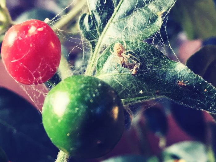 Nature Beauty In Nature Spider RespectNature Enjoying The View Live Green Color Little Things Day Nothingtodo