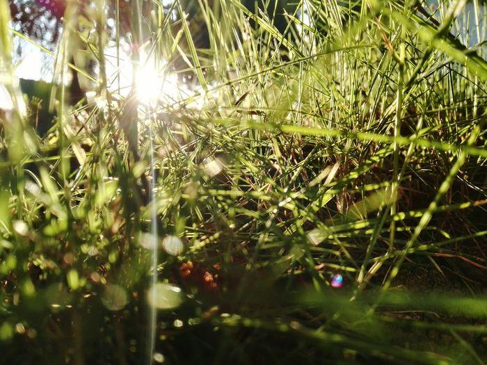 Summer Sunset Sunny Grass Nature Photography Green