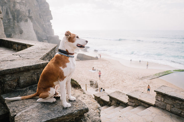 Dog sitting on rock against sky