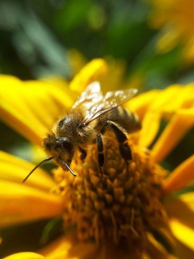 crazy bee on