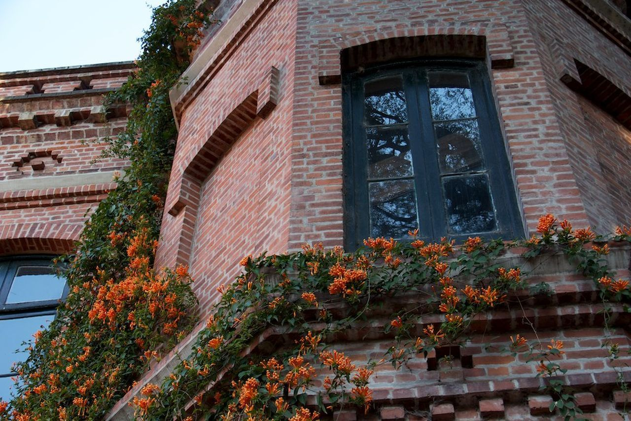 architecture, building exterior, brick wall, outdoors, no people, built structure, window, day, house, tree, autumn, plant, low angle view, flower, leaf, ivy, nature