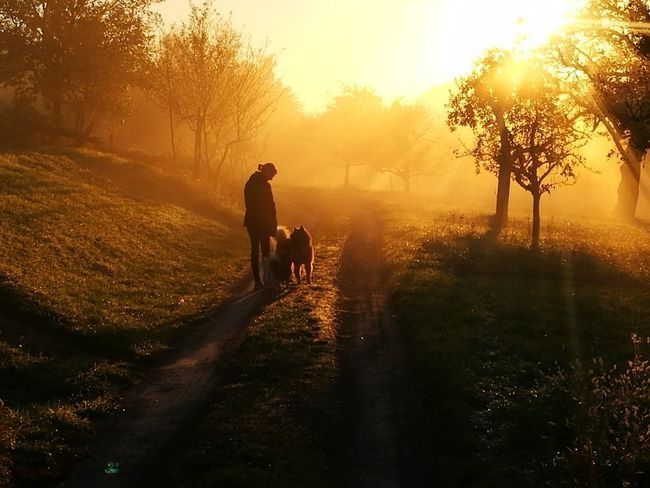 People Walking Morning Sunset Dog Fog Single Lane Road Guten Morgen Beauty In Nature Outdoors Sunlight Tranquil Scene Scenics Eye For Photography Background Backgrounds EyeEm Best Shots EyeEm Nature Lover EyeEm Best Shots - Nature EyeEmNewHere Nature EyeEm Selects
