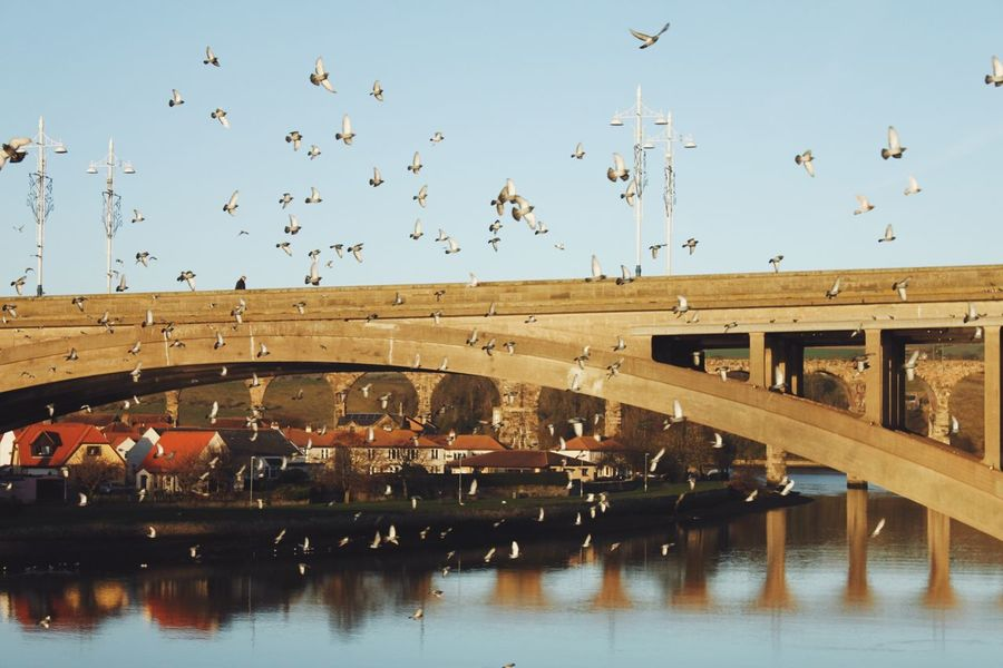 Feed the birds. Water Built Structure Sky Building Exterior Flying Architecture Bird Outdoors Large Group Of Animals Real People Day Nature Flock Of Birds