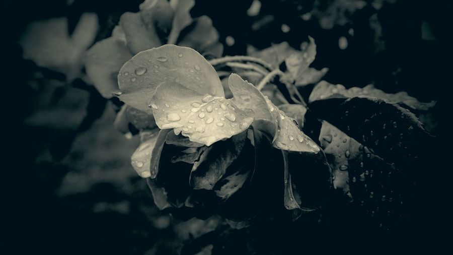 EyeEm Best Shots Close-up No People Nature Leaf High Angle View Plant Part Cold Temperature Growth Plant Fragility Freshness Drop Beauty In Nature Focus On Foreground Water Wet Flower Head Vulnerability  Leaves