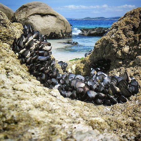 Bueu Galiciaglobal Galiciacalidade Galicia España Naturestagram Nature Photography Art_of_nature Agua Atlantico Folowme Follow Seguir Seguirme Nature Naturaleza Bestinsta Insta Instagood Instaday Beach Playa