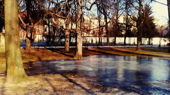 Park Frozen Tree Water Outdoors Day Reflection Nature No People Sunlight Bare Tree Beauty In Nature EyeEmNewHere