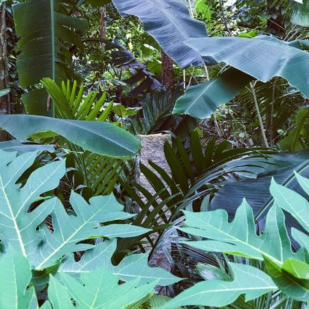 land mark stone Leaf Green Color Plant Growth Nature No People Agriculture Beauty In Nature Outdoors Freshness Tranquility Tro tropical