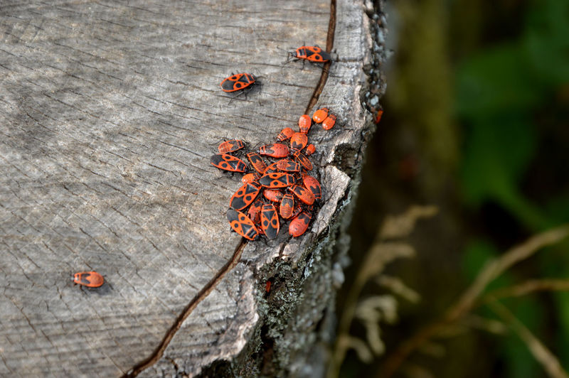 Close-up of beetles on tree stump