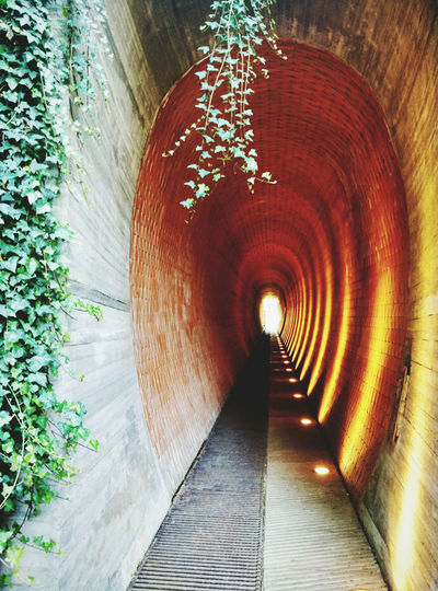 Arch Architecture Archway Built Structure Corridor Diminishing Perspective History Illuminated Light At The End Of Tunnel Lighting Equipment Prague Castle Prague Czech Republic Prague Royal Garden The Way Forward Tunnel Underpass Walkway