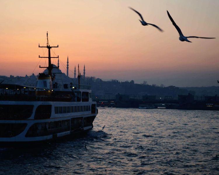 Gununkaresi Sunset Flying Water Bird Nature Architecture Nautical Vessel Spread Wings