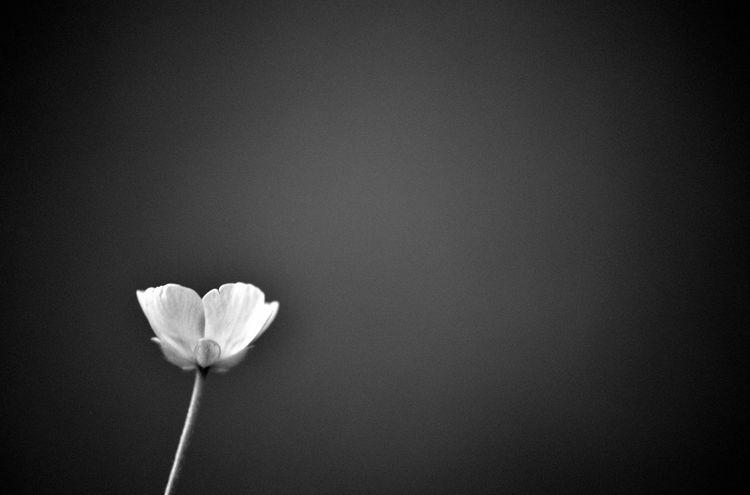 Beautiful Black Bright Conrast Dark Flower Frame Gentle Greyscale Single White