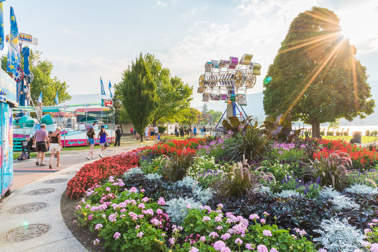 Penticton, BC/Canada - August 12, 2017: Tourists walk through the fairgrounds set up in a downtown park for the huge annual Penticton Peach Festival August British Columbia, Canada Celebration City Park Downtown Event Penticton Peach Fest Rides Sun Star Travel Amusement Park Editorial  Evening Fair Rides Fairground Festival Gardens Park People South Okanagan Summer Sun Flare Sunset Tourism Waterfront