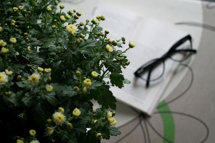 High angle view of white flowering plant on table
