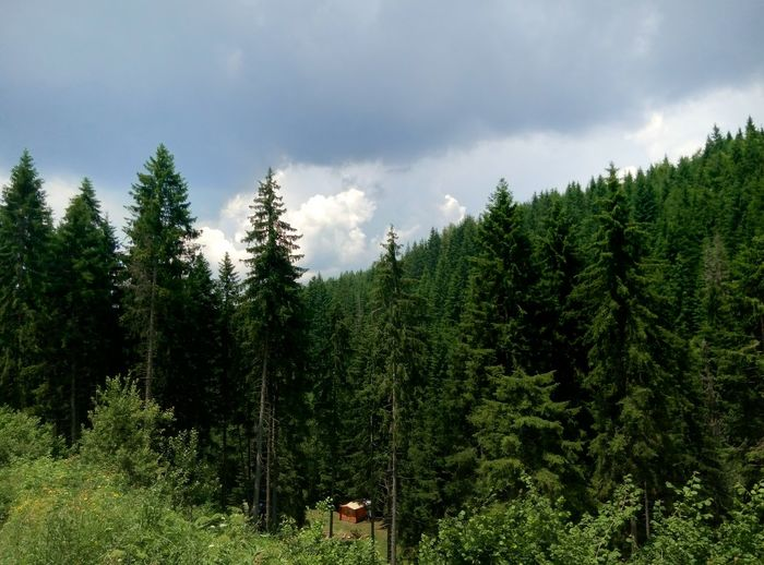 Beautiful mountain Golija Wild Nature Colour Of Life Breathtaking Little House