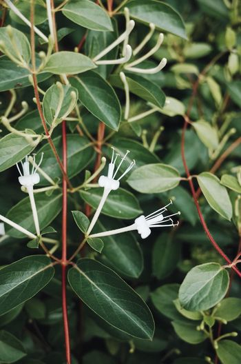 High angle view of white flowering plant leaves