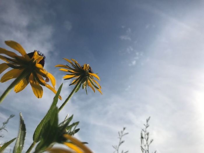 Close-up of flowers blooming against sky