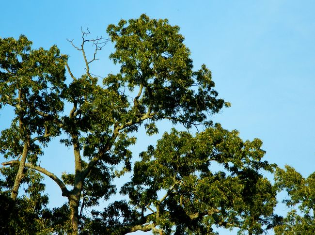 Home of the vultures Clear Blue Branch Clear Sky Day Green Green Color High Section Home Image Of Low Angle View Lush Foliage Nature Outdoors Photo Of Picture Of Scenics Sky Sunny Sunny Tranquil Scene Tranquility Tree Treetop Vulture