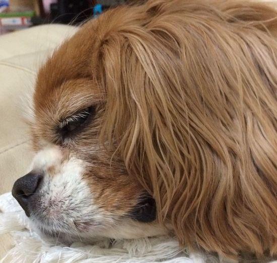 Dog Pets One Animal Domestic Animals Animal Themes Close-up Mammal