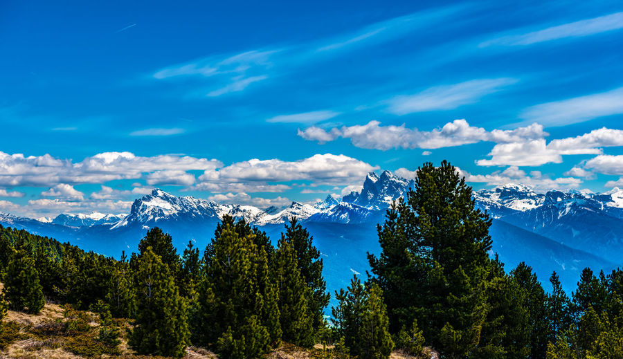 Panoramic view of pine trees and mountains against blue sky