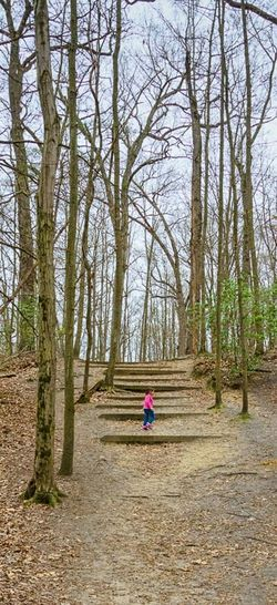 Sjpelosi Photography Crows Woods Haddonfield New Jersey Camden County Children Childphotography