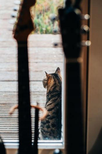 Guitars Guitar Cat Feline One Animal Mammal Animal Themes Domestic Cat Vertebrate Animal Pets Domestic Domestic Animals No People Window Day Indoors  Sunlight Focus On Foreground Home Interior Selective Focus