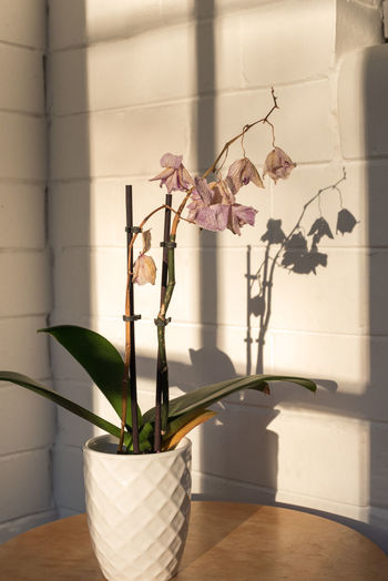Close-up of potted plant in vase against wall at home