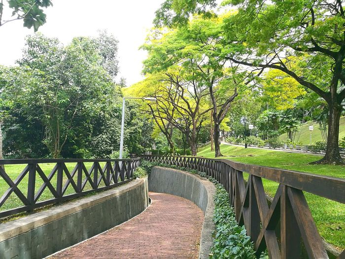 Singapore Singapore View Hidden Places Hidden Gardens Hidden Paradise Greens Garden Cunning Trees Tree Area vacation time Beauty In Nature Beautyful Earth