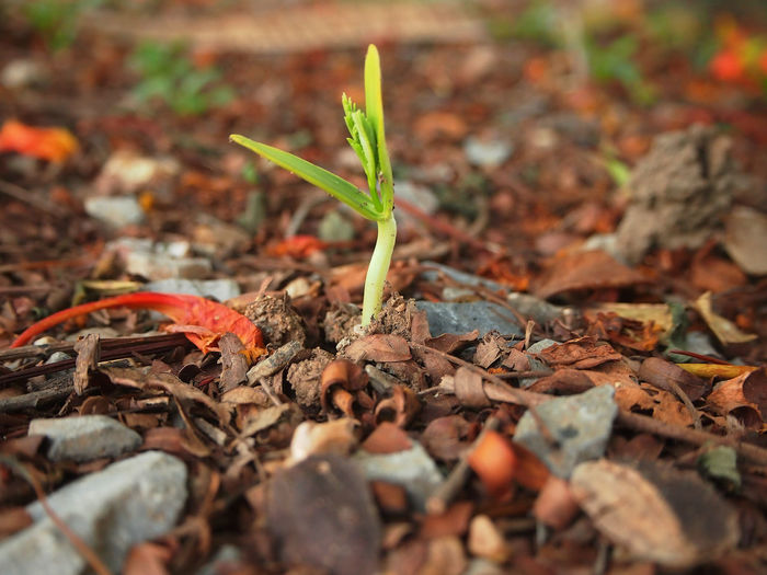 Growing plant on ground Forest Begin Green Germination Tree Plant Growing Gravel Earth Soil Risen New Born Life
