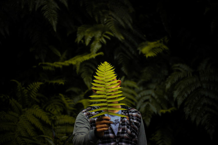 Person holding plant against trees