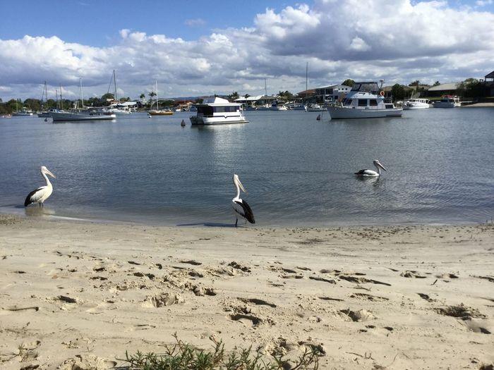 Seagulls In Lake