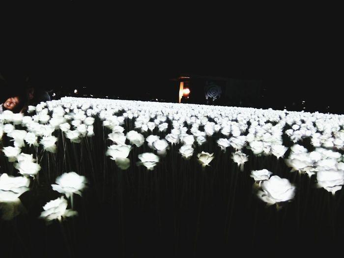 10000 Roses