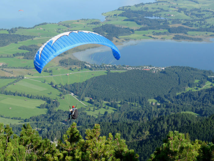 Rear view of person paragliding over trees