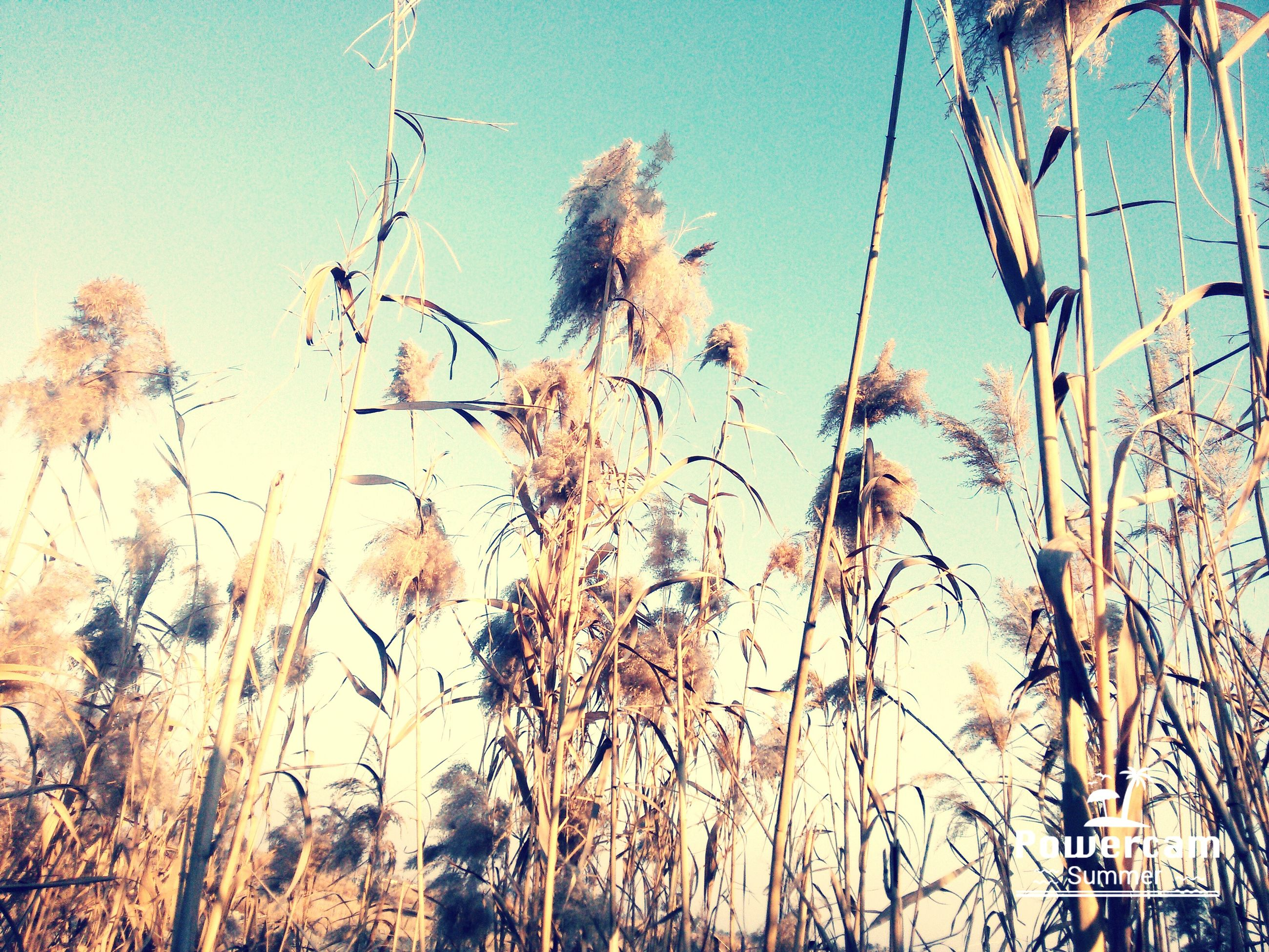 growth, nature, no people, sky, low angle view, close-up, plant, outdoors, day, backgrounds