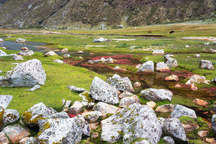 Stream flowing through lush green valley at cordillera blanca in andes mountain