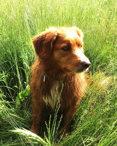 Annie Nsdtr Dog