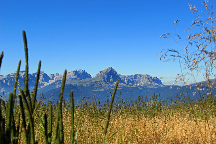 Alps Dolomites Gadertal Grass Mountain Mountains Peitlerkofel Plan De Corones