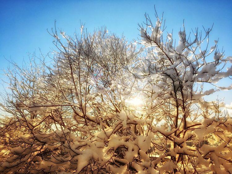 Verschneiter Baum im Gegenlichts Branch Bare Tree Low Angle View Sunlight Freshness