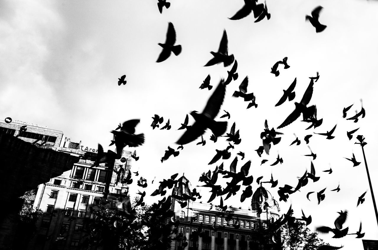 flying, low angle view, building exterior, architecture, bird, animals in the wild, mid-air, animal themes, large group of animals, built structure, sky, outdoors, flock of birds, animal wildlife, day, no people, city, spread wings