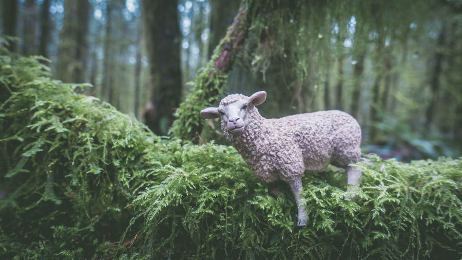 Artificial Sheep On Plant At Forest