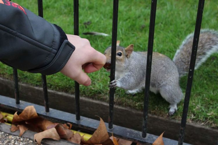 Squirrel Smelling Hand