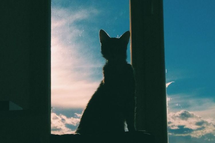No People Sky Outdoors Domestic Animals Day Mammal Nature Animal Themes Cat Watching Cats