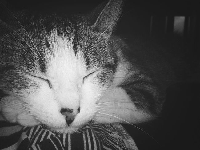 Taking Photos Blackandwhite My Cat Sleeping On Me Happysunday 1st December