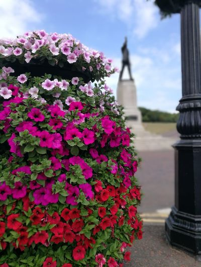Summer Summertime Stormont Estate Stormont Relaxation Flowers Flower City Flower Head Flowerbed Petunia Monument Pink Color Sky Close-up