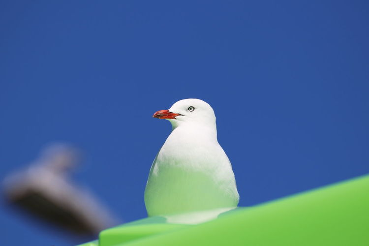 Low angle view of seagull perching on the sky