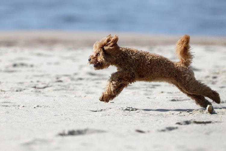 Close-up of dog running on beach