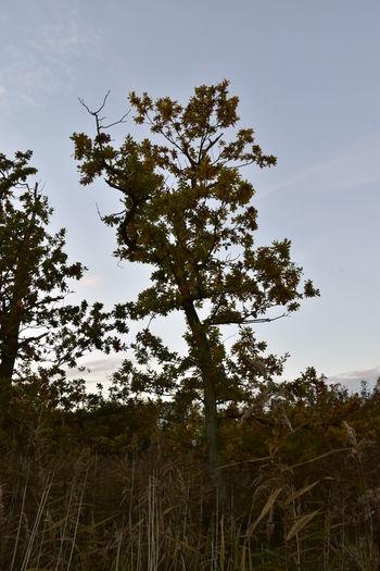 Barton Broad Barton Turf Day Dusk Landscape Nature No People Oak Tree Outdoors Scenics Sky Sunset Tradition Tree
