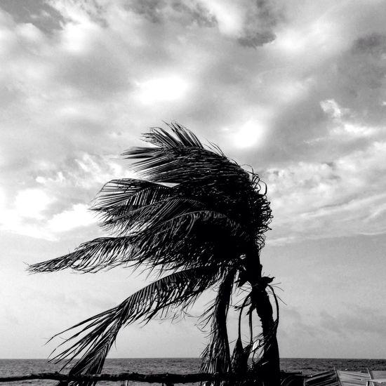 Sigue el viento Un Momento De Paz