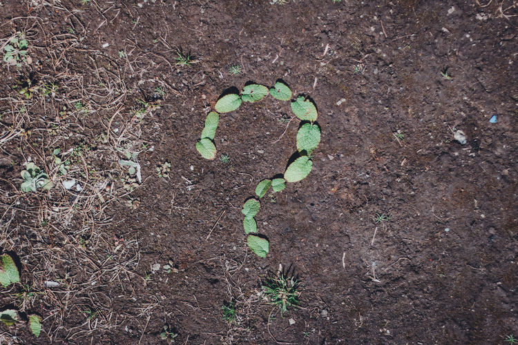 Inquiry Question Questions Question Mark Questions? Graphic Abstract Still Life Simplicity Simple Minimal Minimalism Day Business Finance And Industry Business Contact Why Whynot Ground Backgrounds Header Image Growth No People Dirt Plant Part Leaf Field Land Nature Green Color Plant High Angle View Outdoors Close-up Textured  Directly Above Beauty In Nature Tranquility Beginnings Seedling Mud My Best Photo